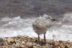 Zand en branding voor de vogels Stock Afbeelding