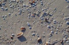 Zand en overzeese shells stock afbeelding