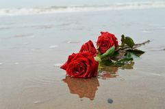 Zand en rozen Royalty-vrije Stock Foto's