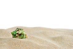 Zand en shell Stock Afbeelding