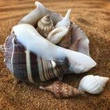 Zand en shells stock afbeeldingen
