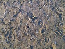 Zand en tweekleppige schelpdieren Stock Foto's