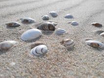 Zand en zeeschelpen, Noordelijke Overzees, Nederland Royalty-vrije Stock Afbeelding