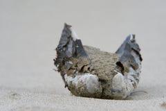 Zand gevuld tweekleppig schelpdier Royalty-vrije Stock Foto