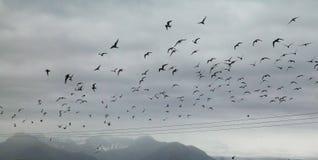 Zand met hoog voltage, zwart, Ijslandse kustlijn en seaguls royalty-vrije stock afbeelding