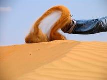 Zand in motie Stock Afbeelding