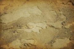 Zand na regen Royalty-vrije Stock Afbeelding