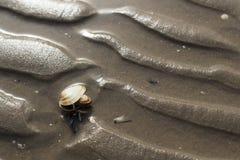 Zand op het strand Stock Afbeelding