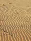 Zand op strand Royalty-vrije Stock Foto's