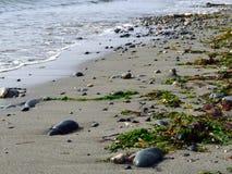 Zand, rotsen, en zeewier Stock Fotografie