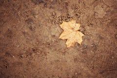 Zandachtergrond met de herfstverlof royalty-vrije stock foto