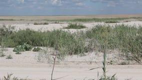 Zandbar met riet wordt overwoekerd dat stock footage