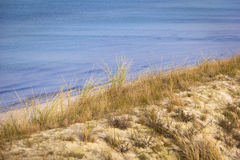 Zandduin met Europese Beachgrass Stock Afbeeldingen