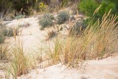 Zandduinen bij het oceaanstrand in Frankrijk Stock Foto's