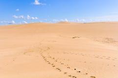 Zandduinen in Cabo Polonio, Uruguay Stock Afbeelding