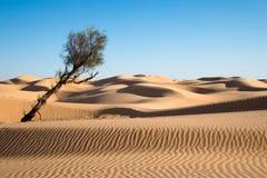 Zandduinen in de woestijn van de Sahara stock foto