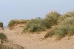 Zandduinen en grassen Stock Foto