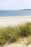 Zandduinen en het landschap van het grasstrand met weloverwogen ondiepe diepte Royalty-vrije Stock Foto