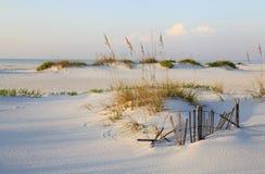 Zandduinen en Overzeese Haver op een Oorspronkelijk Strand van Florida stock afbeelding