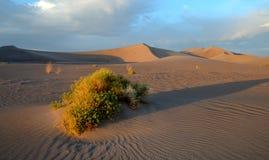 Zandduinen, het Nationale Park van de Doodsvallei, Californië Royalty-vrije Stock Foto's