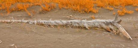 Zandduinen in Jasper Lake Stock Fotografie