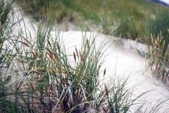 Zandduinen met gras Stock Foto