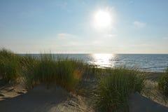 Zandduinen met strandgras bij de Noordzee met zon in de avond stock afbeelding