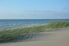 Zandduinen met winderig duinengras op de Noordzee in de wind stock fotografie