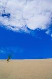 Zandduinen op een blauwe hemelachtergrond verticaal Stock Foto