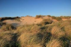 Zandduinen op een strand Royalty-vrije Stock Afbeelding