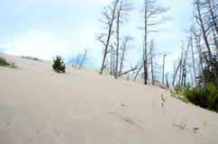 Zandduinen in Polen Stock Afbeeldingen
