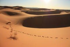 Zandduinen in Sahara Desert in Merzouga Marokko stock afbeelding