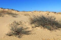 Zandduinen van de grootste woestijn van Europa ` s Stock Foto