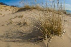Zandduinen van meer Michigan Stock Afbeelding