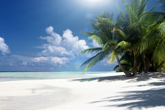 Zandeiland met kokospalmen Stock Fotografie