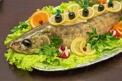Zander fish Stock Images