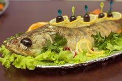Zander fish Stock Photos