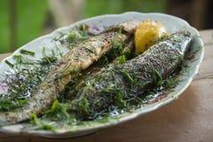 Zander fisk som är förberedd i marinad Arkivbilder