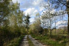 Zanderige die Weg door Bomen, Tsjechische Republiek, Europa wordt gevoerd Royalty-vrije Stock Afbeelding