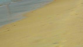 Zandig strand stock videobeelden