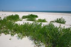 Zandig strand met groen gras Stock Foto