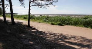 Zandig strand met groene vegetatie en bomen stock videobeelden