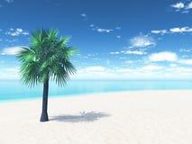 Zandig strand met palm Stock Fotografie