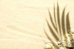 Zandig strand met palm en shells abstracte achtergrond Royalty-vrije Stock Foto's