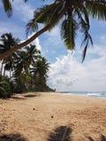 Zandig strand met palmen royalty-vrije stock afbeeldingen