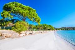 Zandig strand met pijnboombomen en azuurblauw duidelijk water, Corsica, Fran stock foto's
