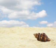 Zandig strand met shell stock afbeelding