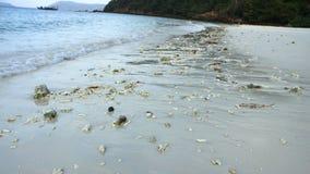 Zandig strand met veel koraal Stock Foto