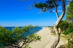 Zandig strand, pijnboomboom, Miami Platja, Catalunya, Spanje Stock Foto's