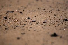 Zandig strand in Toscanië Royalty-vrije Stock Foto's